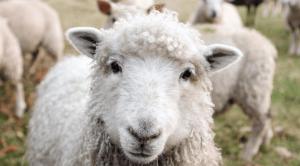 vegan questions
