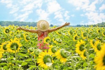 Sunflowers mental energy