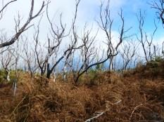 squelettes d'arbres calcinés