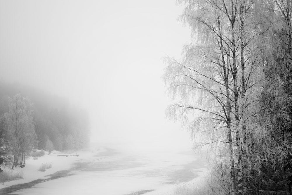 Dimman skapar vita grenar