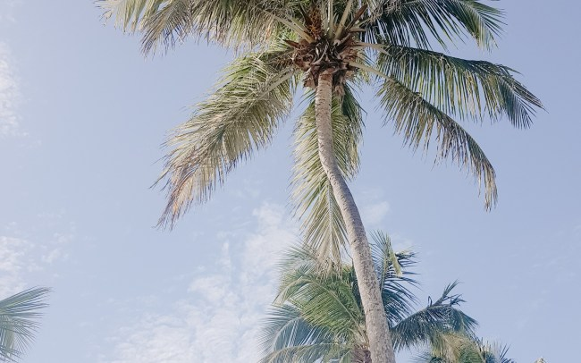 Palm trees against a light blue sky