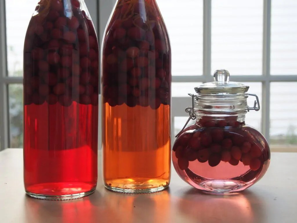 bottles of cranberry gin lined up next to each other