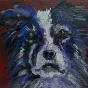 Border Collie Dog painting, border collie portrait, miniature Border Collie