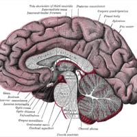 Body and the Brain  |  Expeditionary Learning  |  Montessori 'Hands-on' Learning