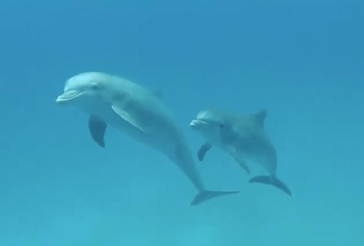 Dolphins in Bimini filmed by Giovannin Damiani, captain of the 65ft sailing catamaran LOLALITA