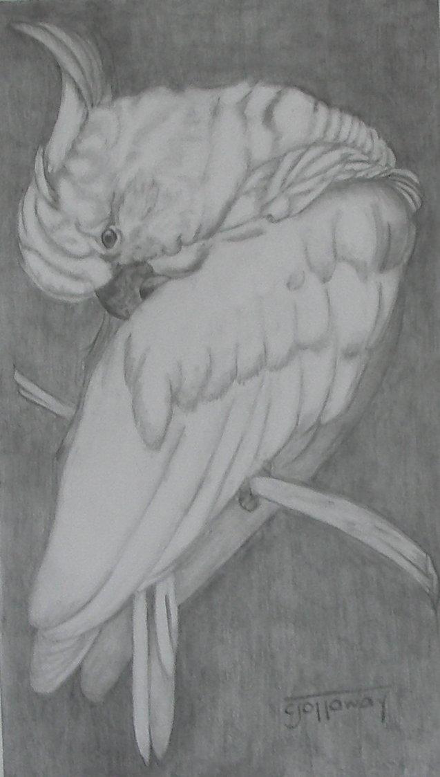 bird-graphite