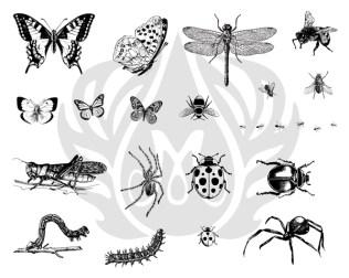 DSS013_Bugs