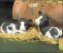 Scioto 1254 cows newborn laying
