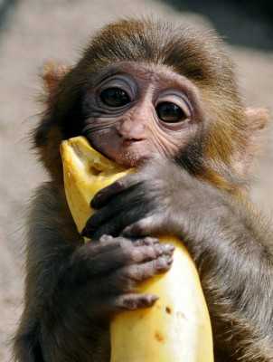Thursday's Tale: Why The Bananas Belong To The Monkey