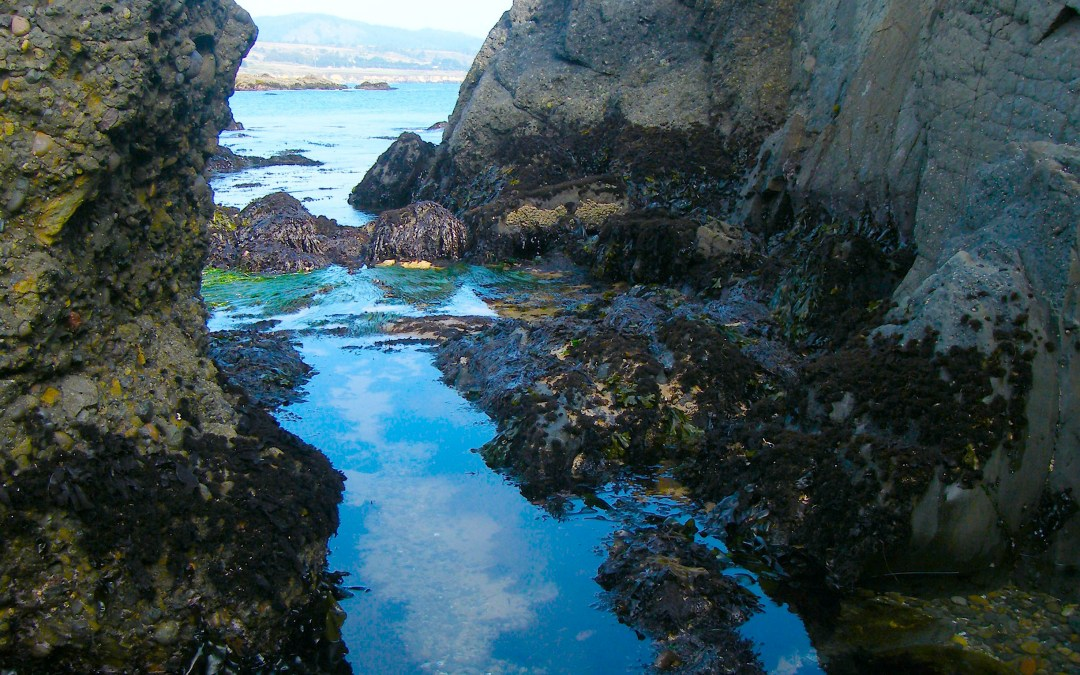 Edge-Dwelling: A Social Ecology For Our Times, Part 4: Low Tide, By Dianne Monroe