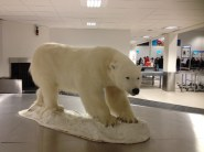 The baggage bear