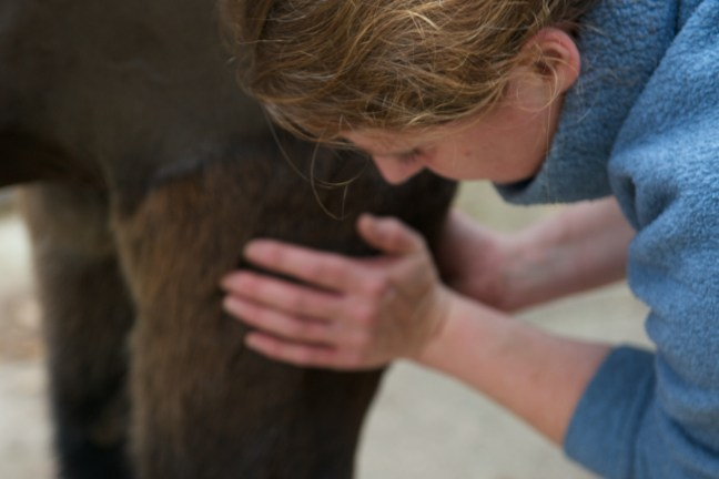 equine osteopathy 072