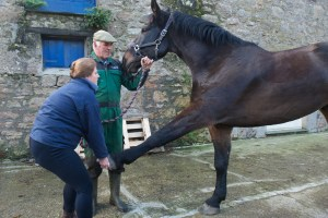 equine osteopathy 088