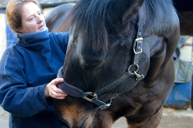 equine osteopathy 111
