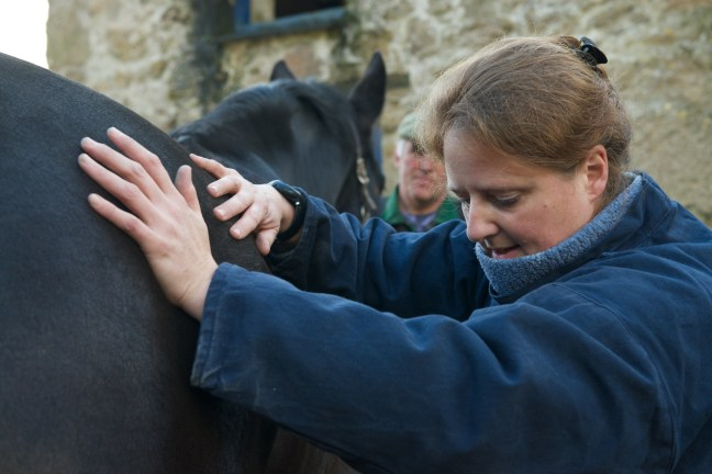 equine osteopathy 124