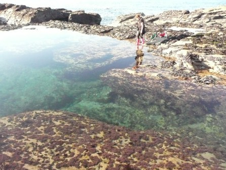 Claire's rock pool at Godrevy