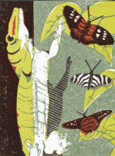 Image of the one-off linocut postcard image of a green gecko by Carolyn Murphy