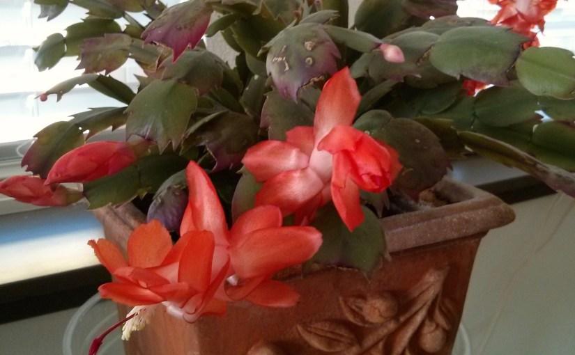 Christmas in Bloom
