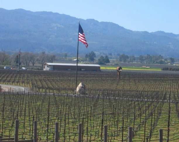 Napa Valley | Six vineyards in one day