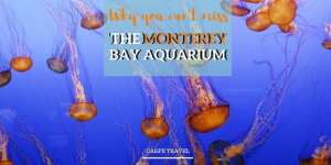 Things to know when visiting the Monterey Bay Aquarium