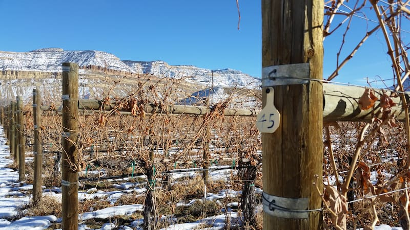 Colorado Wineries: Creekside Cellars in Evergreen Colorado. Click though to read an interview with its winemaker, Michelle Cleveland