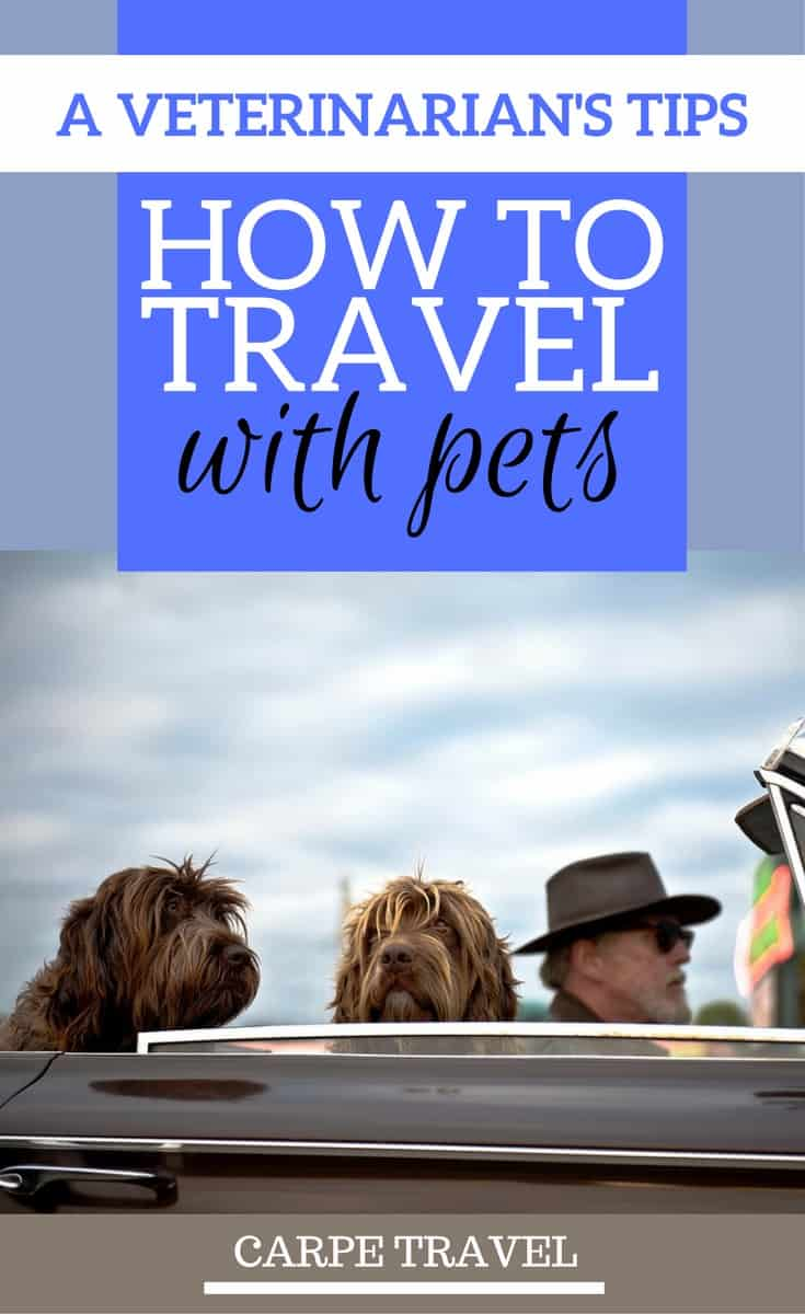 Top Tips on how to travel with pets...according to a vet.