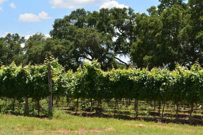 Wine Facts Every Wine Lover Should Know about…TEXAS