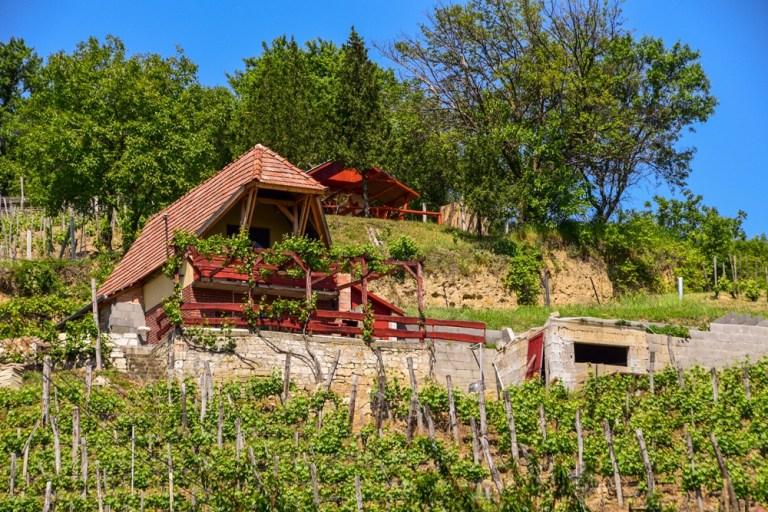 Vineyards, Tokaj