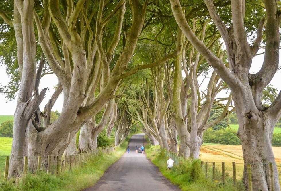Driving tips in Ireland