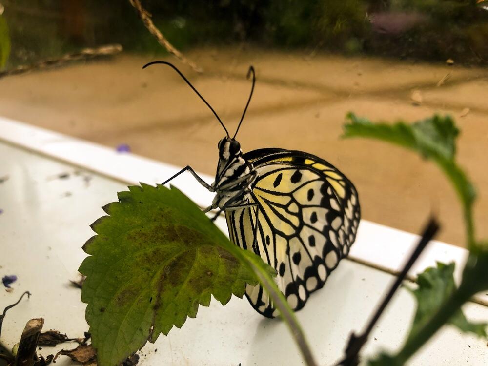 Butterfly House Malahide