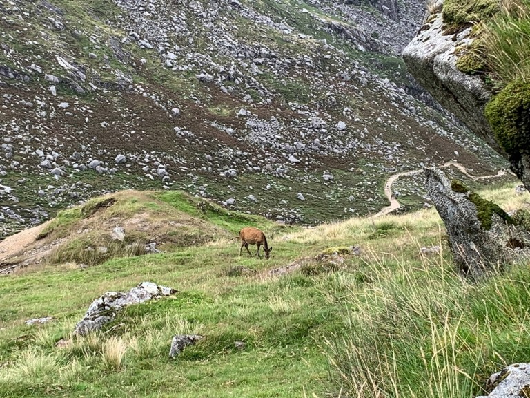 Spinc Glendalough, Glenealo Valley