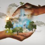 nature planète terre animaux eau forêt bois arbre oiseau