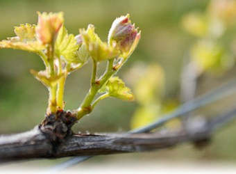 Vino Allegro Wine Imports
