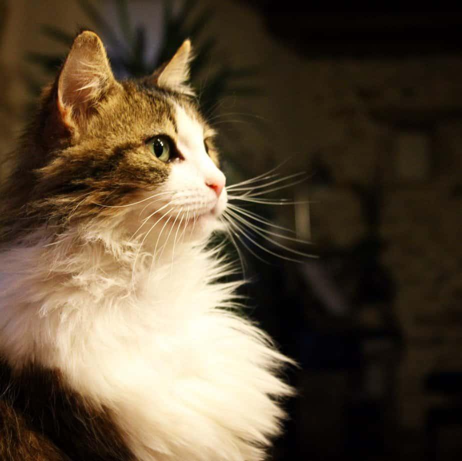 Princesse Bouillotte