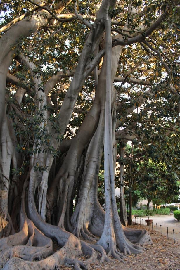 L'arbre du parc