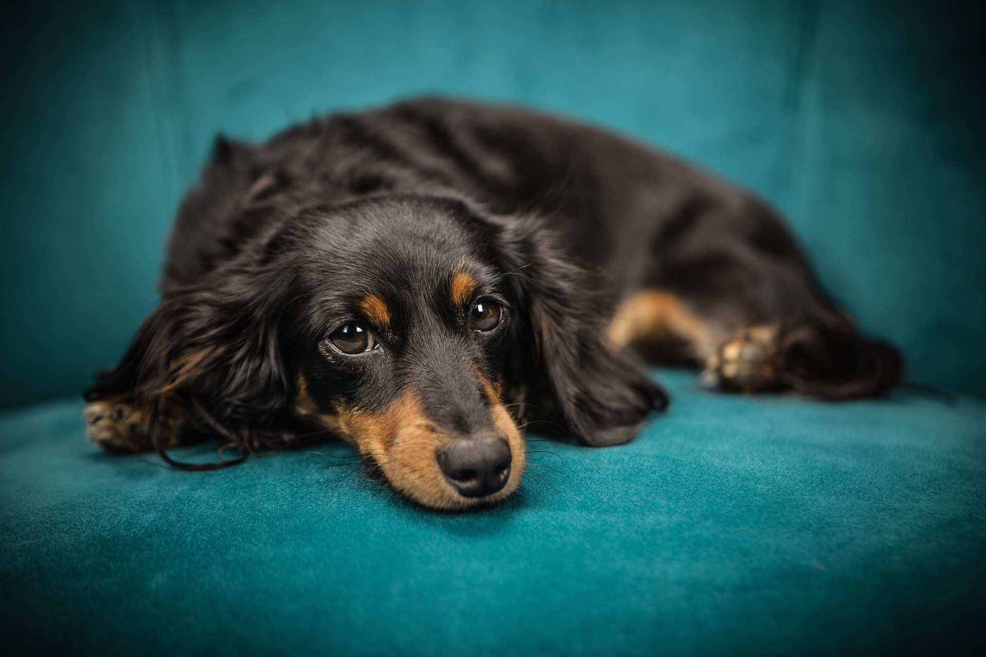 Common Albuquerque Carpet Cleaning Mistakes That Pet Owners Make