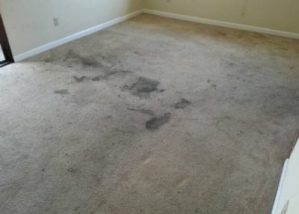 Apartment Before Crystal Clean Carpets Cleaning