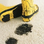 technical information carpet care and maintenance