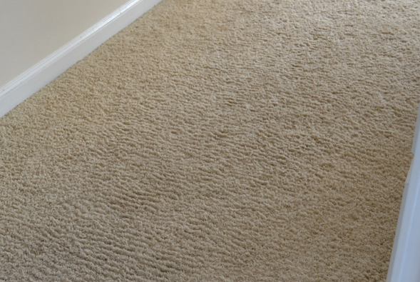 Corn rowing of wall to wall carpet carpets wall wall for How often should you replace carpet