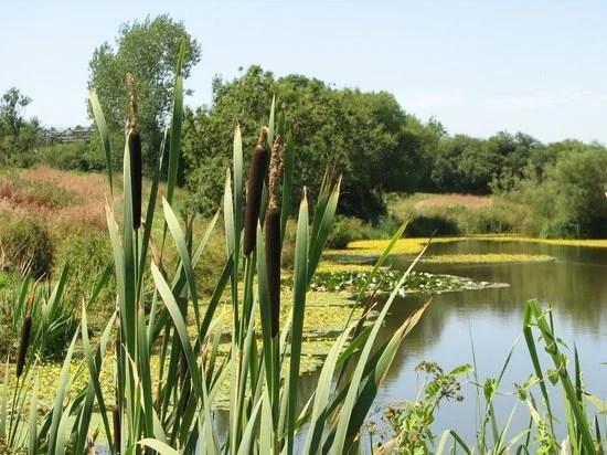 Washingpool Farm Lakes