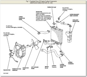 1999 Honda Civic Engine Diagram | Automotive Parts Diagram