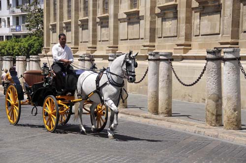 "this driver trotted his lovely horse by the cathedral, executed a one-handed ""u""-turn, and parked the carriage so that the horse was standing in the shade of a tree"
