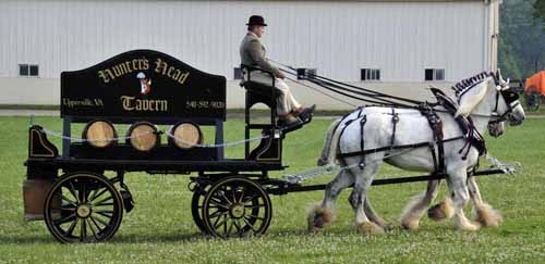 """Ayrshire Farm gave a demonstration of a beer dray, pulled by two huge Shire horses; after watching a few turns around the """"green,"""" everyone was invited to come take a close look at the wagon, the horses, and the harness"""