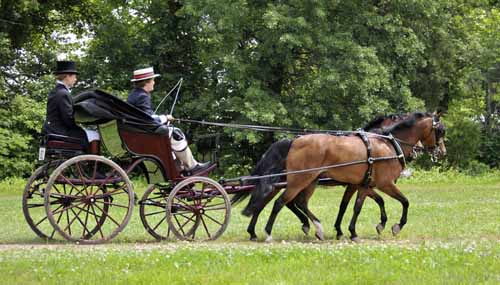 the newly built pony-sized Spider Phaeton owned by Harley Waller (shown here driving during Friday's Sporting Day of Traditional Driving) won the high-point award in the vehicles-in-use division (the Sidney Latham Trophy) and the Peoples Choice Award