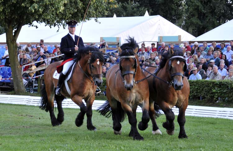 ... and another stallion presentation, with one being ridden and two driven