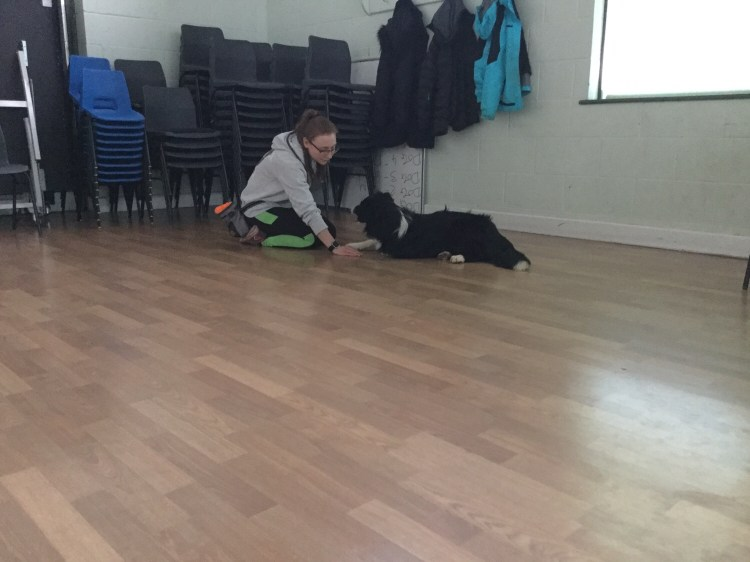 Dog classes Huntingdon