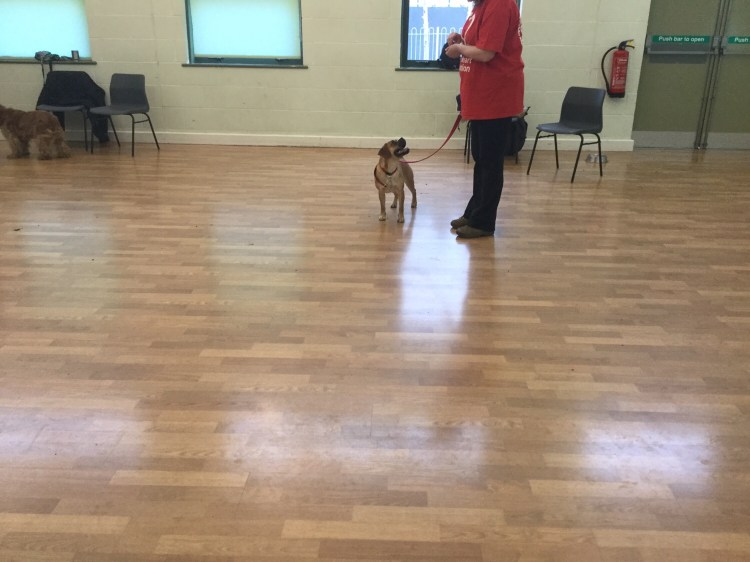 Advanced training classes Huntingdon
