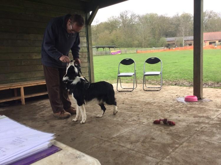 Advanced dog classes Huntingdon