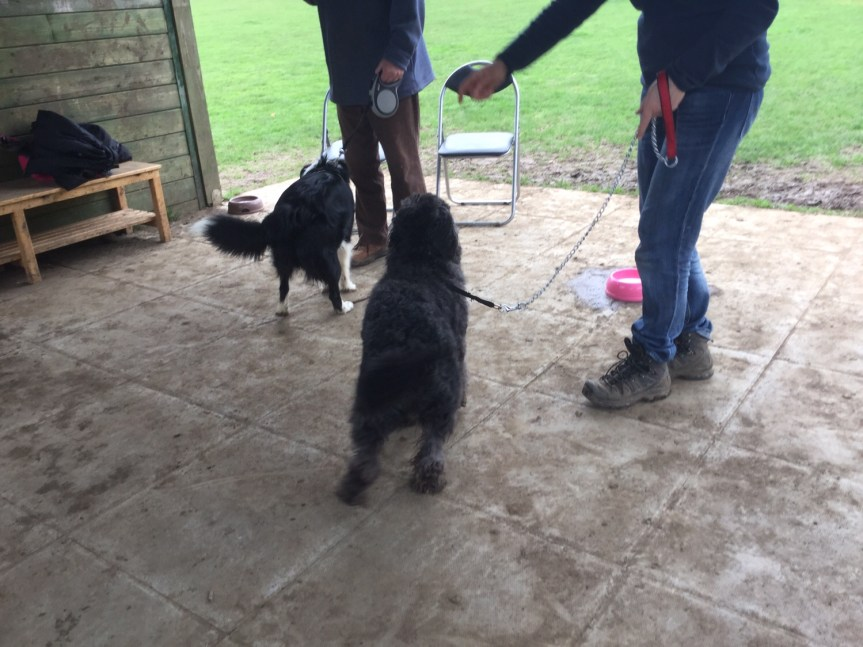 Advanced dog training Cambridgeshire