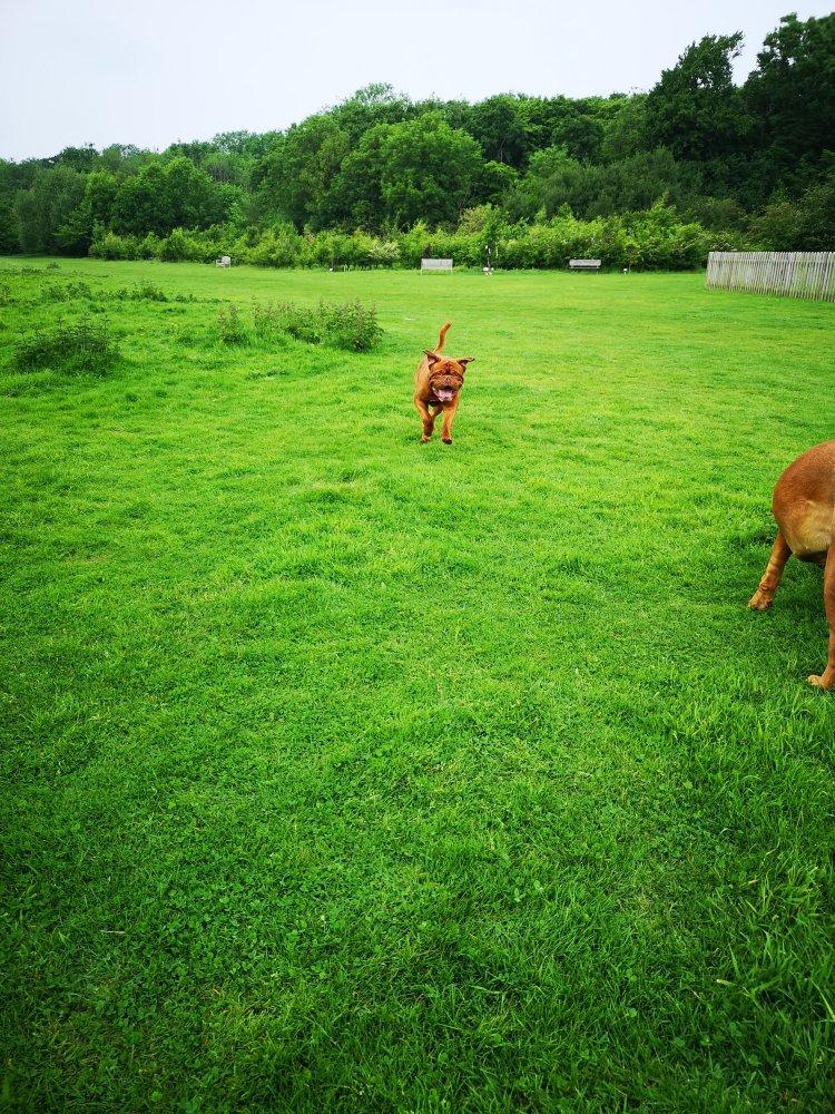 Dog socialisation walks in Cambridgeshire